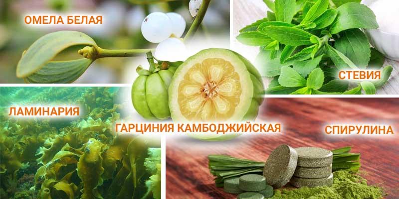 Анорексигенные травы для похудения