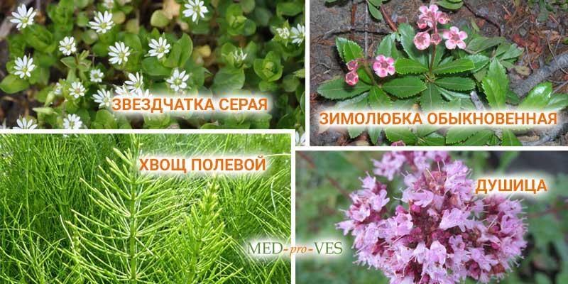 Травы мочегонные для похудения